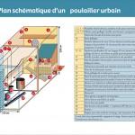 Des poules en ville. Projet Cocorico, Agenda 21, Genève. Graphiste Tristan Boy de la Tour, Lausanne
